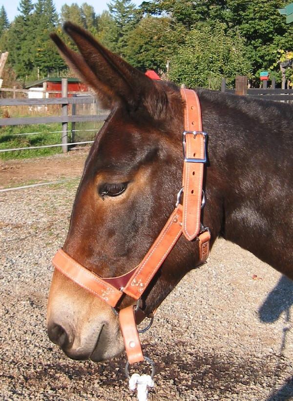 Pack Saddles Amp Accessories Hobbles Panniers Top Packs